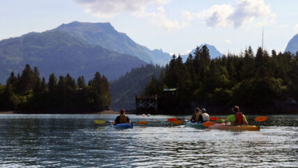 St. Augustine Kayak & Tours - Kachemak Bay - Kayaking Halibut Cove