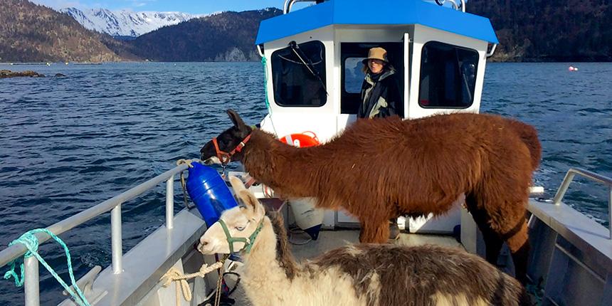 Alan's Water Taxi - Freight Service in Kachemak Bay Homer, Alaska