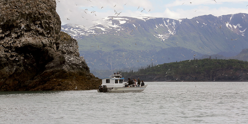 Alan's Water Taxi Tours Gull Island in Kachemak Bay Homer, Alaska